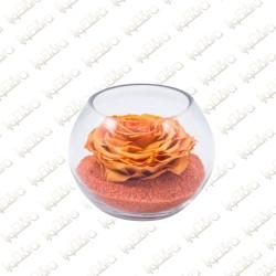 Forever Tangerine
