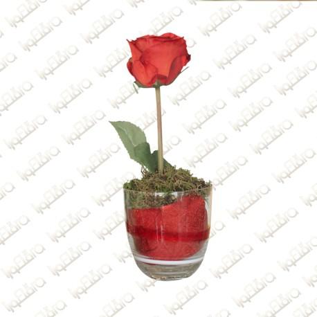 Planted Rose